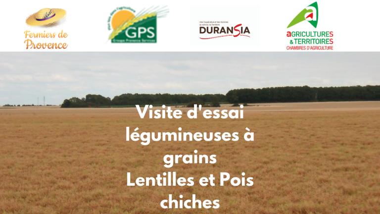 Visite d'essai, léguminauses à grains Lentilles et Pois chiches (3)